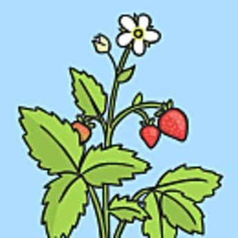 Plants essay in telugu language